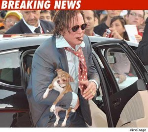 Mickey Rourke dogs