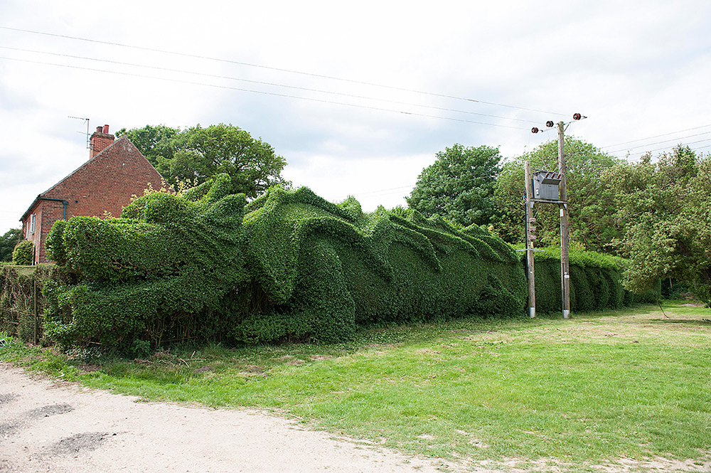 Gardner-shapes-100-feet-long-dragon-hedge