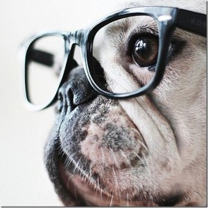 animals-wear-glasses-10_thumb