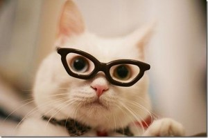 animals-wear-glasses-11_thumb