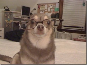 animals-wear-glasses-22_thumb