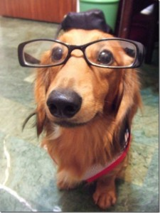 animals-wear-glasses-23_thumb