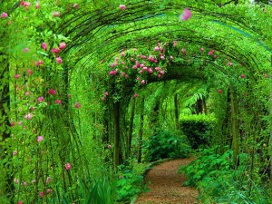 tunnel-of-roses