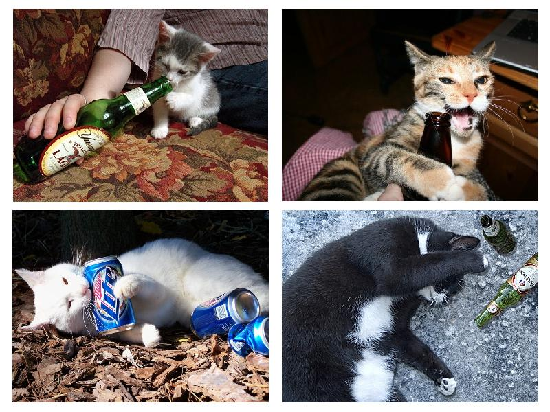 drunk-cats