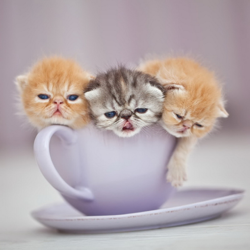 Cuteness-Explosion-Animals-In-Cups35__880