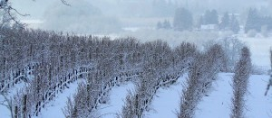 Snow_Covered_Vineyard_by_DancingXInXTheXSky-e1322737567292