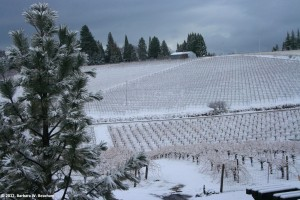 grapes-in-winter
