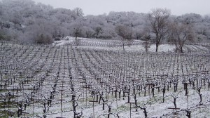 vineyard-eaglepoint-ranch-snow-1000w